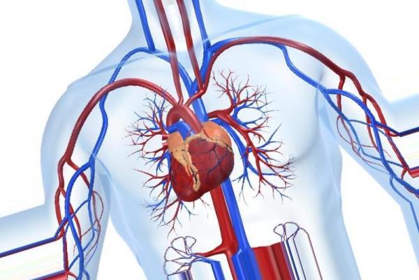 Причины и симптомы гипертрофической кардиомиопатии, а так же диагностика и лечение