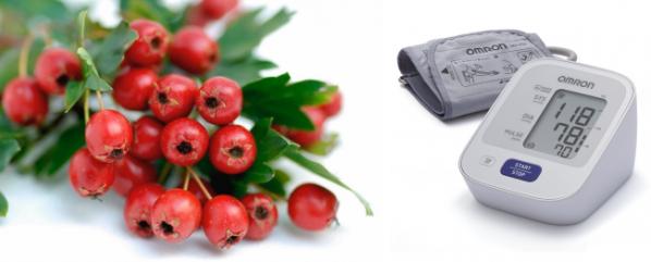 Боярышник от давления и гипертонии: действие на давление, рецепты