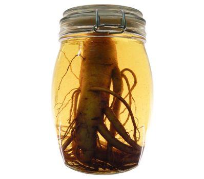 Женьшень повышает или понижает давление: как принимать при гипотонии, а так же настойка и рецепт с мёдом при низком АД