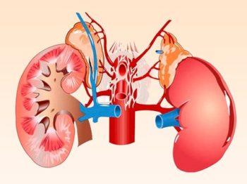 Причины, симптомы и лечение почечной гипертонии народными рецептами и хирургическим методом