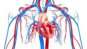 Можно ли пить алкоголь после инфаркта