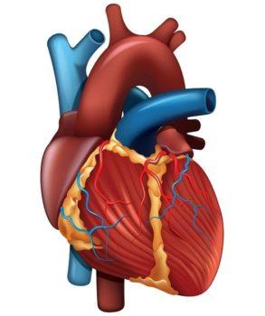 Инфаркт миокарда второго типа